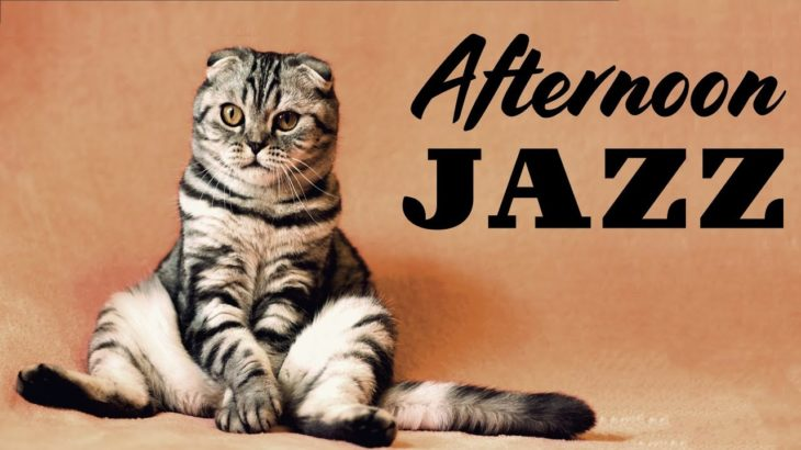 Relaxing Afternoon JAZZ – Background Instrumental Cafe Jazz Music – Music for Studying, Work, Relax