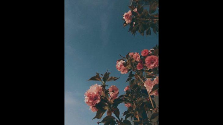 [FREE] Funk // R&B type beat – Vút Bay